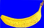 Banane auf blauem Grund